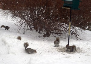 Six squirrels near our bird feeder this afternoon.