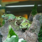 Frogs at the Duluth Zoo