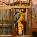 Blue and gold macaw at the Duluth Zoo