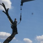 The crane was able to help remove limbs as they were being cut.