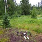 Woods near Lutsen