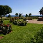 Duluth, MN rose garden