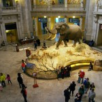 Inside The Smithsonian Museum of Natural History